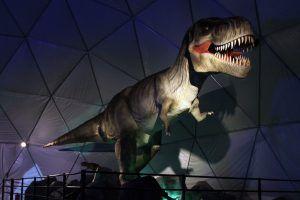 DinosTaxt2